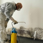 Finding a Mold Remediation Company